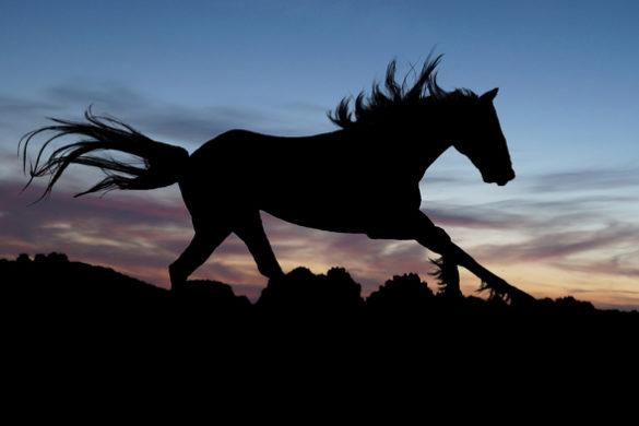 Instituto Freedom - Cavalo selvagem animal de poder